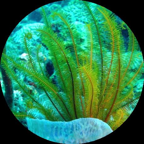 dermilla-krem-wyciag-esktrakt-z-alg